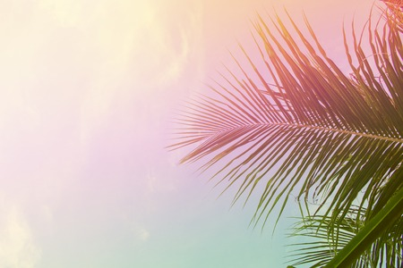 Palm tree leaves on sky background. Palm leaf over sky. Pink and yellow toned photo. Tropical island dream natural backdrop. Paradise island fantastic template with place for text. Summer holiday card
