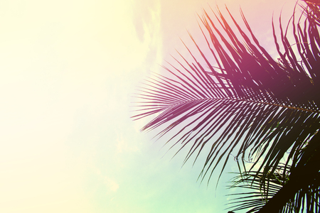 Palm tree leaves on sky background. Palm leaf over sky. Pink and yellow toned photo. Tropical island natural backdrop. Paradise island fantastic template with place for text. Summer holiday banner Stock Photo