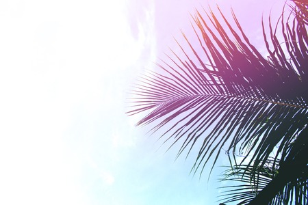 Palm tree leaves on sky background. Palm leaf over sky. Pink light toned photo. Paradise island romantic template with place for text. Summer holiday banner Stock Photo