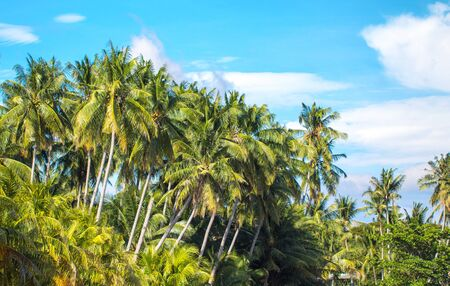 Tropical landscape with palm trees and blue sky. Travel in exotic place. Fresh greenery of tropical island. Exotic coco palm trees photo background. Sunny and optimistic scene of summer tropic nature