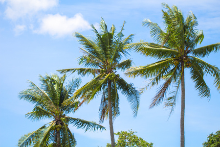Tropical landscape with palm trees. Palm leaves on sky background. Tropical scene with coco palms. Sunny day in exotic paradise. Summer holiday banner template. Green palm crowns background photo Stock Photo