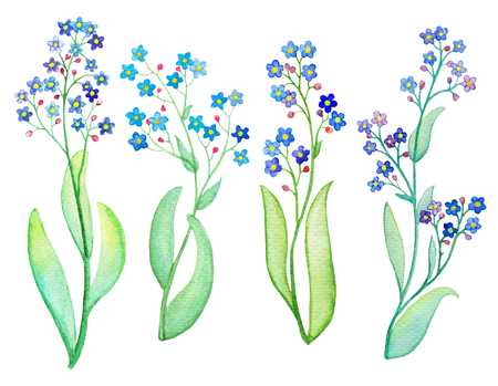 Forget-me-not blue flower branch with leaf. Watercolor painting on white background. Forget-me-not bouquet hand-painted illustration. Hand-drawn watercolour flower. Floral decor for wedding design