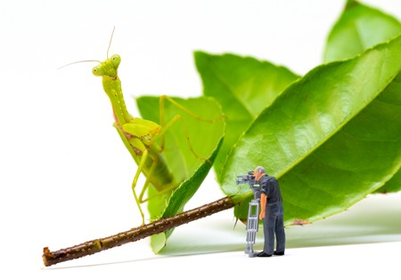 Videographer and green mantis. Videographer work in process. Exotic insect Mantis hunting tiny puppet. Little cameraman filming exotic animal. Dangerous profession funny scene. Tiny people macrophoto Stock Photo