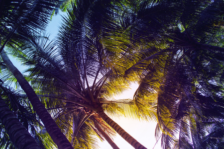 wanderlust: Tropical palm leaf on sunset sky background. Tropical nature moody effect toned photo. Green tropical garden in evening sunlight. Romantic sunset on exotic island. Sunset sky palms banner backdrop Stock Photo