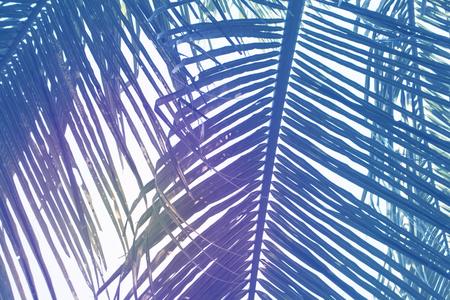 wanderlust: Green palm leaf over sky background. Beautiful palm leaf photo with moody effect tone. Palm leaves background. Tropical nature vintage print or poster. Exotic vacation tourism banner. Zen wanderlust