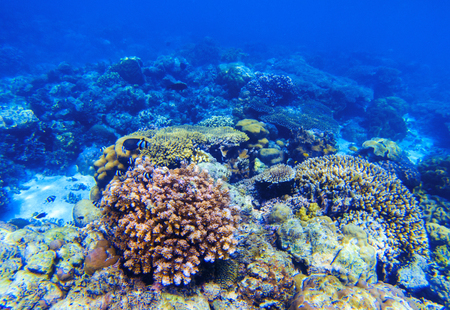 Coral reef underwater landscape. Diverse coral shapes. Coral fish in reef. Colorful tropical fishes in wild nature. Sea bottom with coral ecosystem. Tropic seashore snorkeling. Undersea background Stock Photo