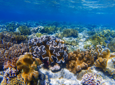 Underwater landscape with coral reef. Coral undersea photo. Seashore texture. Coral closeup. Sea bottom with young coral ecosystem. Tropical seashore snorkeling. Marine relief landscape. Tropic lagoon Stock Photo