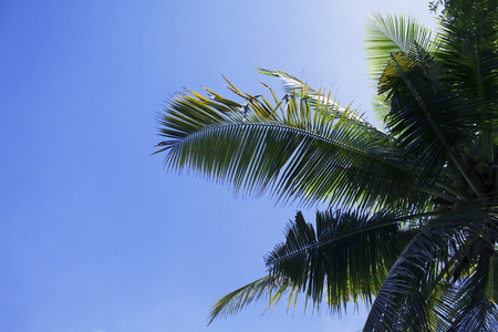 Green palm leaf on blue sky background. Tropical summer sky. Tropic island nature photo. Exotic vacation banner template with place for text. Coco palm leaves under sunlight. Summer travel skyscape Stock Photo