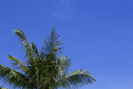 Green palm leaf on blue sky background. Tropical summer sky. Tropic island nature photo. Exotic vacation banner template with place for text. Coco palm leaves under sunlight. Relaxing summer skyscape Stock Photo