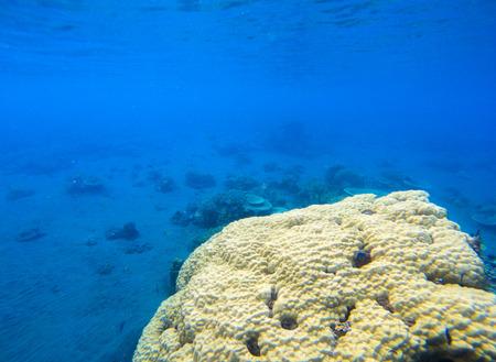 Coral seaworld in tropical seashore. Undersea landscape photo. Fauna and flora of tropical shore. Coral reef underwater photo. Snorkeling in tropics. Exotic island seaside vacation. Aquarium banner