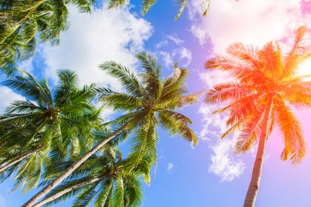 Red flare on coco palm trees. Tropical landscape with palms. Palm tree crown on cloudy sky. Sunny tropical island toned photo. Sunshine on palm leaf. Blooming tropical nature. Exotic island travel 스톡 콘텐츠