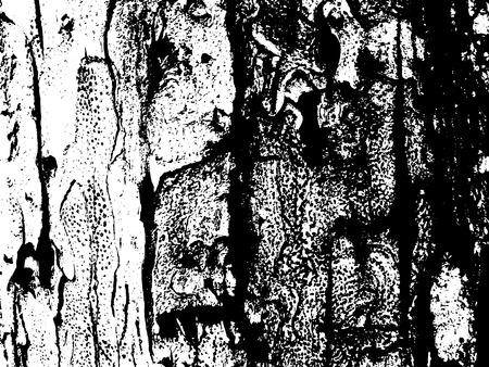 Houten kofferbak oppervlak. Houten schors textuur. Oude textuur van houtplank.