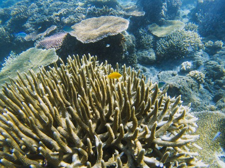 Yellow fish in spiky coral reef. Tropical seashore inhabitants underwater photo. Coral reef animal. Warm sea nature. Colorful sea fish and corals. Undersea view of marine life. Coral reef landscape