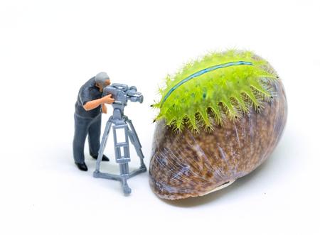 Miniature cameraman and green caterpillar. Operator at work shooting tropical animal. Cameraman tiny model and insect. Videographer job concept. Tropical nature studio shot. Exotic insect in camera