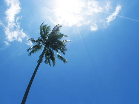 Tall palm tree silhouette on blue sky. Palm tree crown with green leaf on sunny sky background. Coco palm view from ground. Summer travel banner. Exotic island nature photo. Tropic summer wallpaper