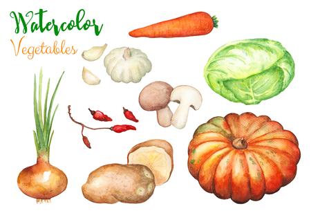 Watercolor vegetables on white background. Autumn harvest handdrawn illustration. Onion, cabbage, pumpkin carrot, potato, garlic, mushroom isolated. Colorful vegetables. Fall season garden harvest