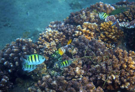 Underwater landscape with tropical fish. Undersea view photo. Fauna and flora of tropical shore. Coral reef underwater photo. Snorkeling in tropics. Exotic island seaside vacation. Aquarium banner Foto de archivo