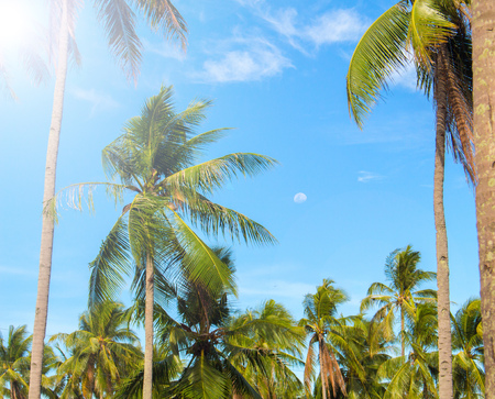 Sunny tropical landscape with coco palm trees. Exotic place view through palm tree silhouettes. Palm trees under sun flare. Peaceful holiday island image for poster or card. Coconut palm leaves banner Stock Photo