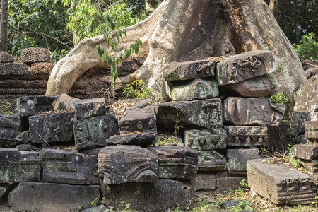 Tropical tree in stone ruin of Angkor Wat complex, Cambodia. Aerial roots or lianas over stone wall.