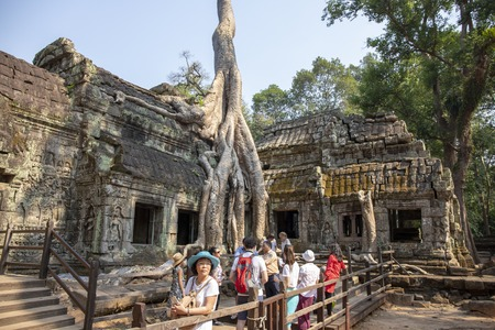 Siem Reap, Cambodia - 26 March 2018: Asian tourists in ancient temple. Tourist group in Ta Prohm temple. Tropical tree grows from ancient temple ruin. Khmer heritage landmark . Asia travel sightseeing