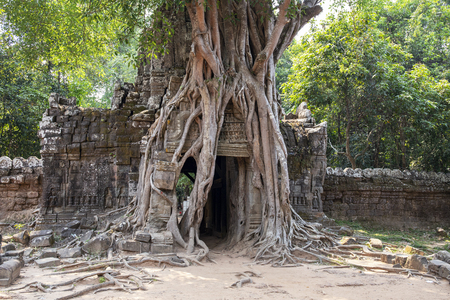 Ancient ruins of Ta Som temple in Angkor Wat complex, Cambodia. Stone temple ruin with jungle tree aerial roots. Abandoned temple demolished by tropical jungle. Tourism and sightseeing place in Asia. Фото со стока