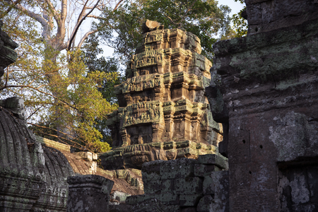 Ancient ruins of Ta Prohm temple in Angkor Wat complex, Cambodia. Angkor Wat temple tower in sunset light. Stone temple ruin. Abandoned temple in green jungle. Tourism and sightseeing place in Asia.