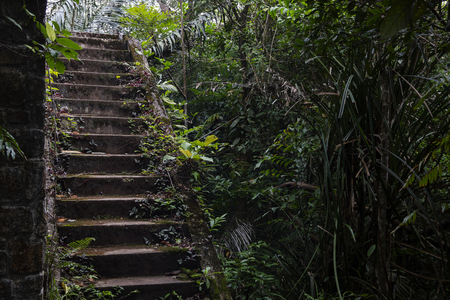 Abandoned house and tropical jungle. Old building in tropics. Rustic stone stairs in bush. The historic site remains. Abandoned living house in Cambodia. Jungle forest bush and haunted mansion Stock Photo