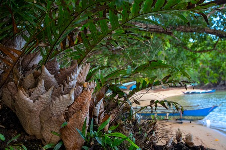 Tropical tree green and dry leaves, seaside landscape background. Rustic fisherman village view through jungle bush. Tropical island seashore with forest and beach. Simple lifestyle on exotic island