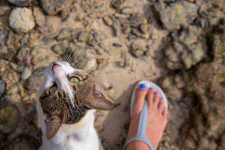 Cat looking into camera with woman's foot. Stray cat rubs on legs top view photo. Cute white and brown kitten with green eyes. Domestic animal outdoor. Traveling with pet. Summer vacation pet care