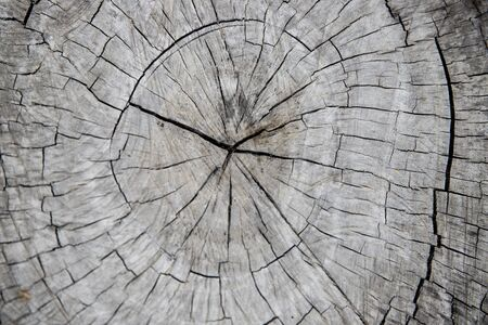 Wooden trunk cross-section. Tree trunk top view photo. Natural timber background with weathered cracks. Old grey wood closeup. Timber texture for vintage backdrop. Trunk cut with perennial rings