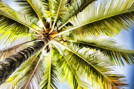 Green palm tree with coconut expressive digital illustration. Palm leaf abstraction. Romantic honeymoon or holiday banner template. Coco palm crown view from ground. Tropical nature. Summer travel Фото со стока