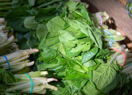 Chinese cabbage on market stall. Fresh green vegetable photo. Cabbage plant with green textured leaf. Edible plant for healthy diet. Natural vegetable salad ingredient. Organic lettuce