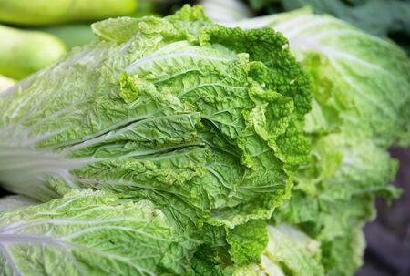 Chinese lettuce leaf closeup. Fresh green vegetable photo. Cabbage plant with green textured leaf. Edible plant for healthy diet. Natural vegetable salad ingredient. Raw lettuce leaf on farm market