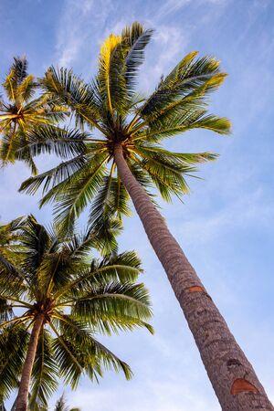 Tropical palm tree branch on blue sky background, vertical photo, Summer travel destination. Social media cover image. Fluffy palm leaf on wind. Idyllic tropical island seaside landscape