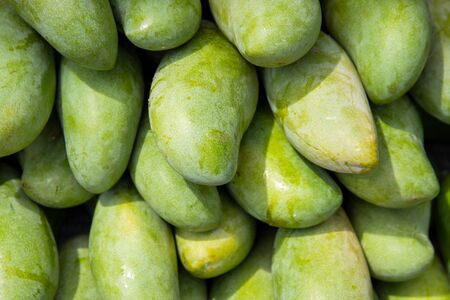 Fresh green mango pile on the fruit market stall. Bunch of tropical fruits. Ripe mango. Sweet dessert or raw vegetarian food. Exotic fruit in South Asia. Whole mango texture for food package design