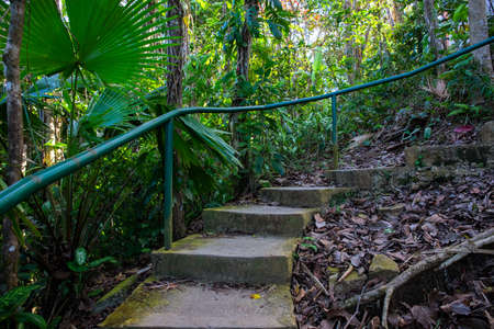 Old mossy stone stairs in tropical jungle. Tropical island natural photo. Treking or hiking adventure in jungle forest. Rustic steps up to wild nature. Outdoor exploration. Summer vacation in Asia Stock Photo