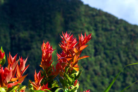 Red flowers on top of mountain landscape. Tropical island hiking scene. Green forest detail. Summer trekking actvity. Travel and explore natural parkland. Mountain hiking trail