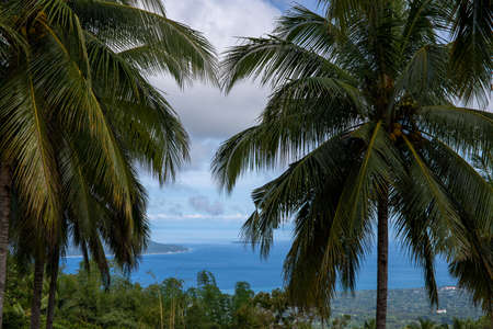 Sea view through coco palm trees, tropical nature photo. Tropical island landscape with sea and palm trees. Hiking in volcanic island mountains. Summer vacation in South Asia. Coastal land panorama