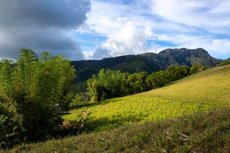 Tropical island landscape with agriculture field and mountains. South Asia mountain landscape in sunny day. Joyful natural view of Philippine island. Hiking in summer natural park