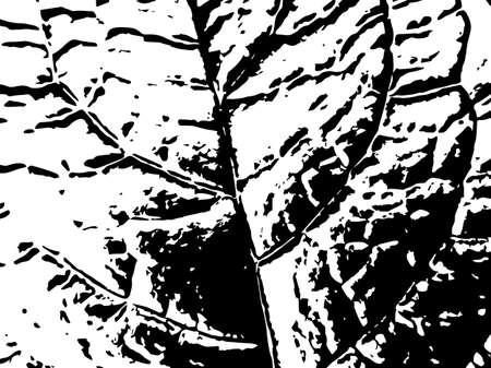 Black and white leaf vein vector texture. Black splatter on white background. Natural leaf stamp for vintage design. Foliage vein pattern surface. Leaf macro texture