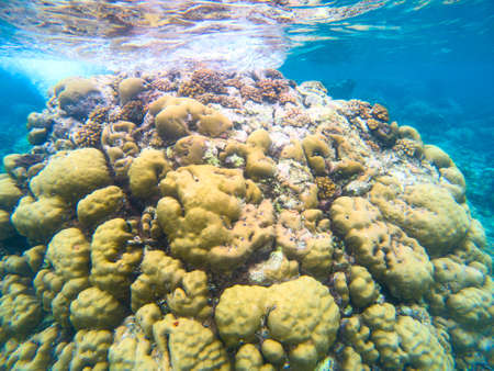 Yellow coral reef in blue sea water, underwater nature photography. Coral reef undersea landscape with marine animals. Exotic island lagoon diving banner template Banque d'images