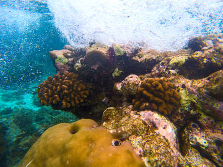 Yellow coral reef in blue sea water, underwater nature photography. Coral diversity undersea landscape with marine animals. Exotic island lagoon diving