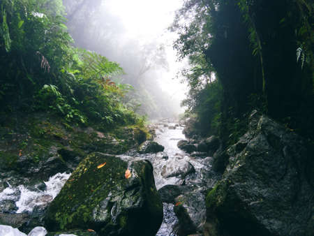 Humid mountain river in green jungle forest. Tropical nature photo. Mountain river in jungle forest. Wet rainforest landscape with fresh water current. Wild forest view in fog. Hydro trekking banner
