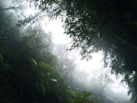 Misty view of tropical jungle and cloudy sky. Rainforest in fog, view from valley between green mountains. Tropical jungle forest calming landscape. Rain season in South Asia