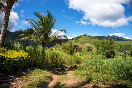 Green tropical landscape with mountains and rural land. Philippine countryside panorama. Coco palm tree near rustic path in corn fields. Sunny day in tropical island. South Asia countryside.