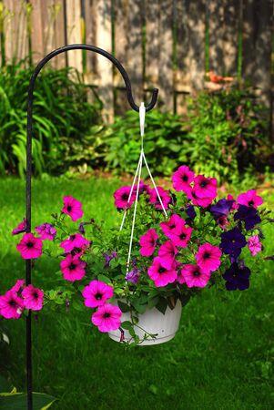 hanging basket of blooming purple petunias