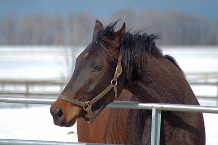 Horse in its` Paddock Reklamní fotografie