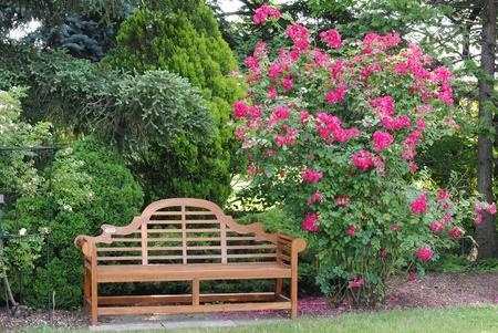 rose bush: Garden Bench and a Rose Bush Stock Photo