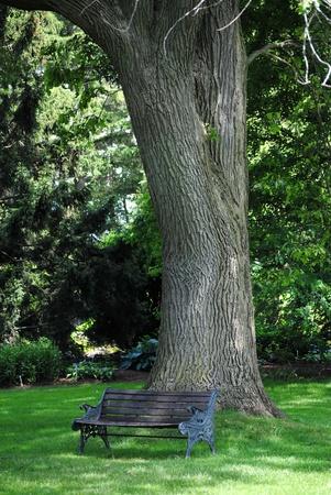 Parkbank en een grote eikenboom