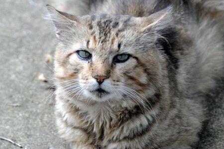 Gray House Cat Imagens